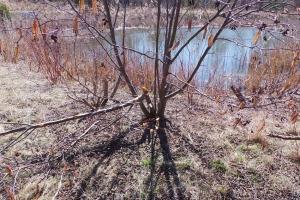 Noonan Beaver pond