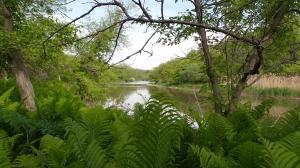 Noonan Hikes River 20150527_100659