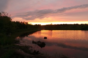 Sunset in Beare Wetlands