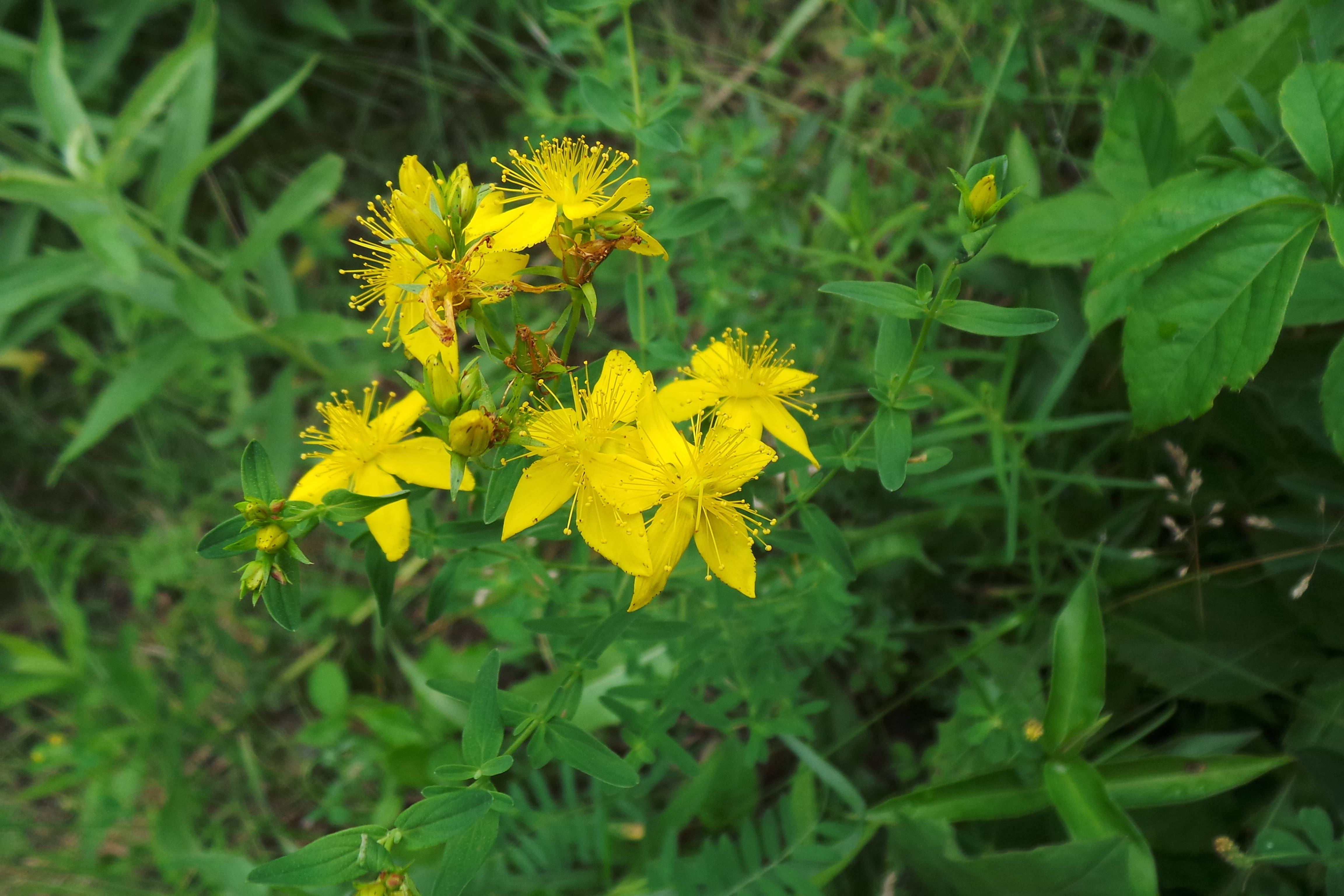 Nature Made St John S Wort