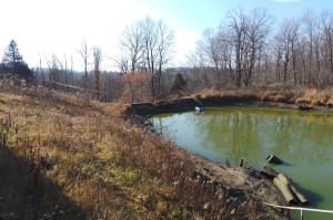 Partially drained pond at dam end.