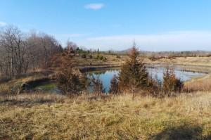 Pond in Beare Wetlands