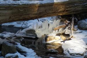 _ Ice Woodland 20160127_ s