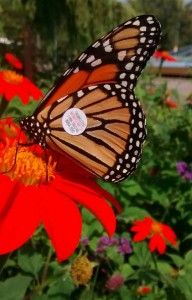 __monarch-terry-tag-n0-wba550